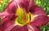 Comment prendre une photo de fleur grande encore