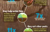 Infographie de ver de terre