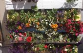 Faire votre propre jardin de palette