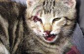 Odyssée d'Homère, l'histoire d'un chat et comment obtenir trop de chatons sans le vouloir, vraiment rapides.