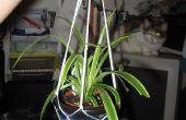 Comment faire un support de corde de plante en pot suspendu : un peu