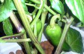 CoreConduit : Automatisé contrôleur de jardin