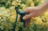 Comment faire pour installer l'Irrigation par égouttement