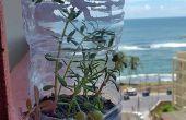 Jardin dans une bouteille en plastique