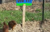 Poussin creuse il signe