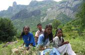 Les grands espaces: À la recherche de plantes médicinales