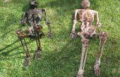 Comment le cadavre un squelette (le Quick et façon sale qui n'impliquent pas de Latex)