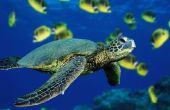 Un Costume de tortue sous-marine fait Simple