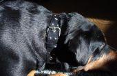 Comment faire un collier de chien peu coûteux.