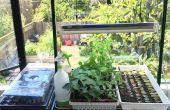 Agriculture urbaine : Starter intérieure plantes provenant de graines