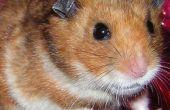 Attraper un échappé Hamster avec Surplus Electronics