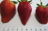 Mise à jour de confiture de fraises