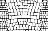 Faire des Textures pour Second LIfe