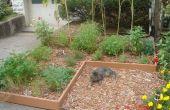 Jardin d'herbes aromatiques simple feuille paillis