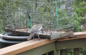 Le grand oiseau et écureuil preuve mangeoire