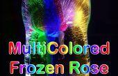 Multicolores gelée Rose voyant