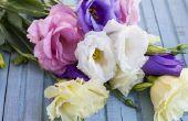 Ajouter le charme à votre jardin avec des fleurs d'été