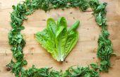 Comment : Conserver les verts frais