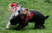 Em Ride Cowboy chien Costumes