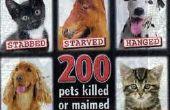 Les plus grands abus Animal Contribute à tous les jours les gens