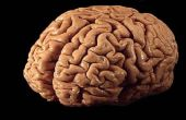 Comment jouer avec votre esprit