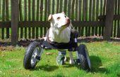 Adaptable fauteuil roulant pour chiens handicapés