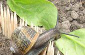 Projet ayant échoué : Gardant escargots loin d'un jardin de légumes