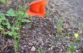 Laisser une trace de fleurs comme vous faire défiler les terres en friche. (+ matériel bonus)