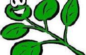 3 moyens faciles pour garder vos plantes heureux