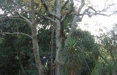 Comment obtenir une corde dans un arbre (sans escalade il)