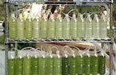 Un bioréacteur d'algues de bouteilles d'eau recyclées