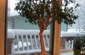 Former des bonsaï avec Sugru