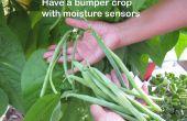Avoir une récolte exceptionnelle avec capteurs d'humidité et ARDUINO