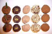 Anatomie d'une truffe au chocolat