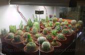 Réservoir d'affichage bricolage Cactus !