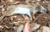Comment faire cuire un lapin dans les bois