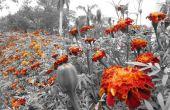 Fleurs toujours donnent des couleurs à ce monde de noir et blanc