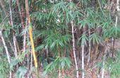 Amplificateur de bambou simple téléphone portable music (10 minutes)
