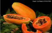 À l'aide de papaye comme une polyvalente remidies fait maison