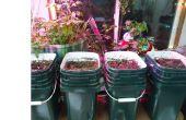 Aquaponique hybride / sol jardin d'hiver intérieur