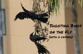 Oiseaux de tir à la volée (avec un appareil photo)