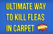 Comment tuer les puces en tapis naturellement
