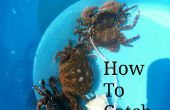 Comment faire pour attraper des crabes