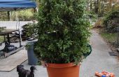 Costume de l'arbuste (Bush, plante)