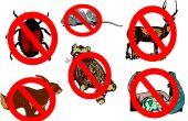 Comment se débarrasser des indésirables animaux - mise à jour