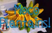 Meilleure façon de récolter les bananes Plantains Moco.