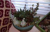Comment élever des plantes succulentes