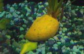 Maison de poissons Gel alimentaire