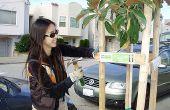 Comment obtenir un arbre sur votre bloc à San Francisco