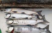 Comment arrondir un nouveau pris saumon